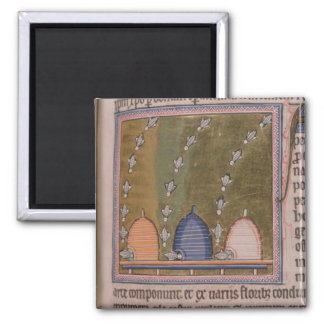 Bestiary Three curved lines Square Magnet