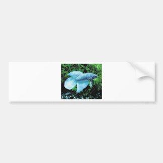 betta and cobalt blue bumper sticker
