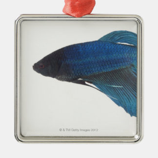 Betta Fish or Male Blue Siamese Fighting Fish Silver-Colored Square Decoration