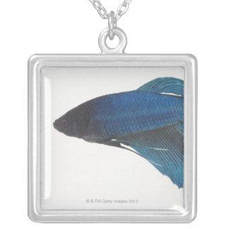Betta Fish or Male Blue Siamese Fighting Fish Silver Plated Necklace