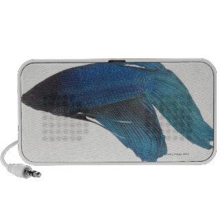Betta Fish or Male Blue Siamese Fighting Fish Mp3 Speakers