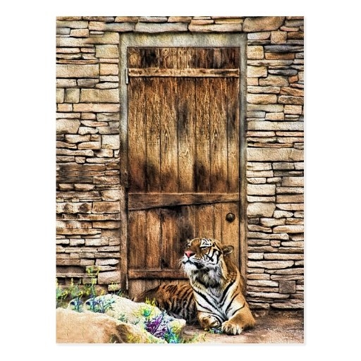 Beware of House Cat Wild Tiger at Cottage Door Post Cards