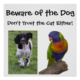 Beware of the dog. Don't trust the cat either Poster