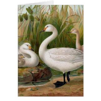 """""""Bewick Swan"""" Card"""