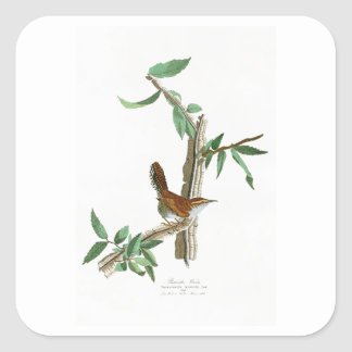 Bewick's Wren John James Audubon Birds of America Square Sticker