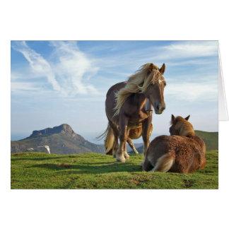 bianditz / Icelandic horses Greeting Card