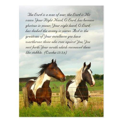Bible passage, Beautiful horses Postcard