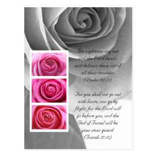 Bible passage, rose close up black and white postcard