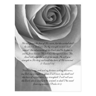 Bible passage, rose close up black and white postcard