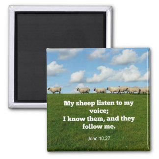 Bible verse, John 10:27, My sheep... Square Magnet