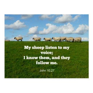 Bible verse, John 10:27, My sheep... Postcard