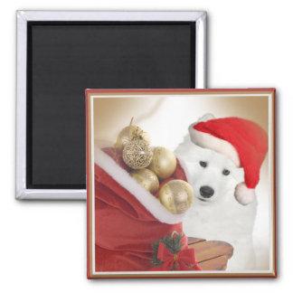Bichon Enjoying Christmas Magnets