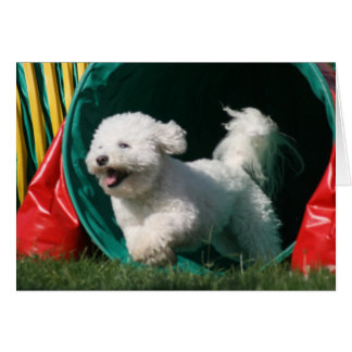 """Bichon Frise Agility"" Photo Greeting Card"