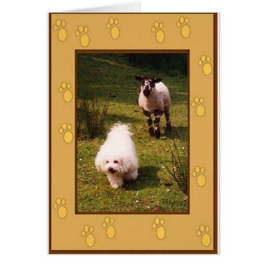 Bichon Frise and Lamb Greeting Card