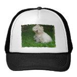 Bichon Frise Dog Baseball Hat