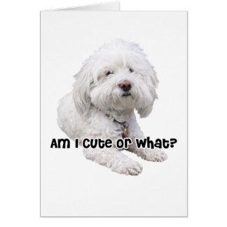 Bichon Frise Dog Card