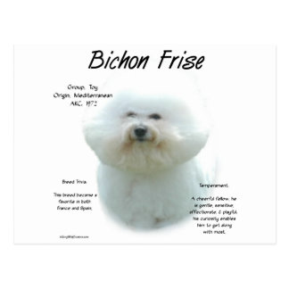 Bichon Frise History Design Postcard