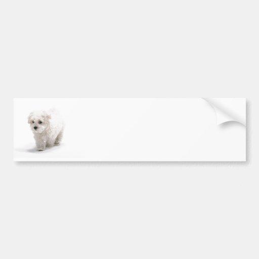 Bichon Frise Photo Bumper Sticker