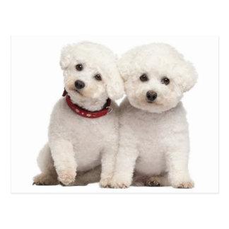 Bichon Frise Puppy Dog Blank Post Card