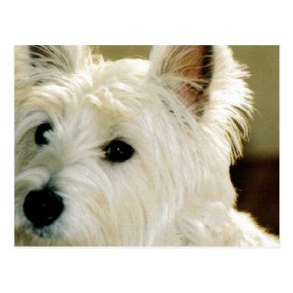 Bichon Frise Puppy Postcard