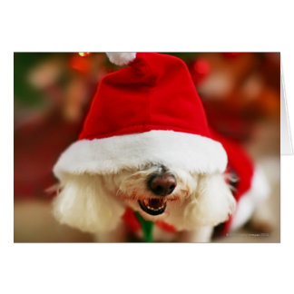 Bichon Frise puppy wearing Santa costume Card