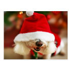Bichon Frise puppy wearing Santa costume Postcard