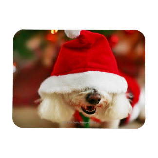 Bichon Frise puppy wearing Santa costume Rectangular Photo Magnet