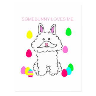 Bichon Frise Somebunny Loves Me Post Cards