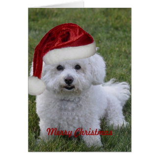 Bichon Merry Christmas Greeting Card