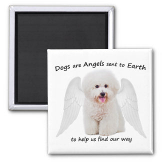 Bichons are Angels Magnet