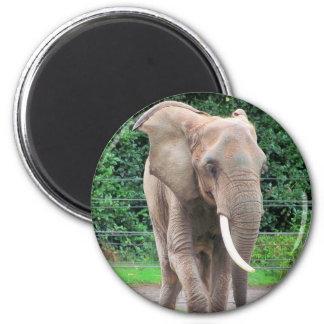 Big African Bull Elephant 6 Cm Round Magnet