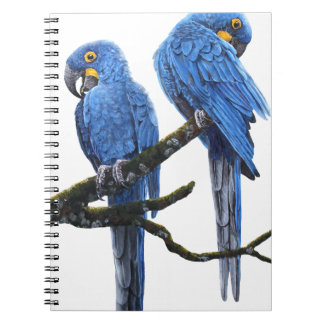 Big and blue Hyacinth Macaws Notebook