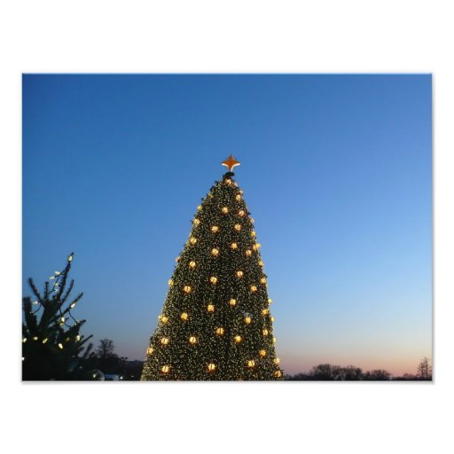 Big and Little Christmas Trees Photo Print