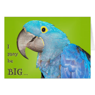Big and Loveable Card