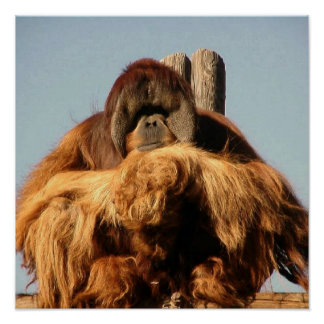 Big Ape Poster