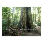 Big Basin Redwoods State... Postcard