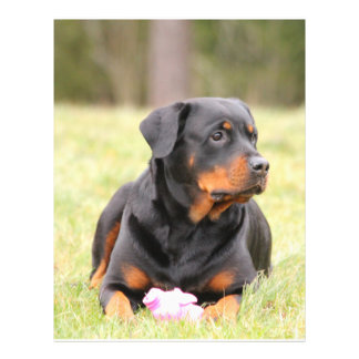 Big Beautiful Rottweiler 21.5 Cm X 28 Cm Flyer