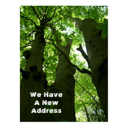 Big Beech Trees Summer Forest Moving Postcard