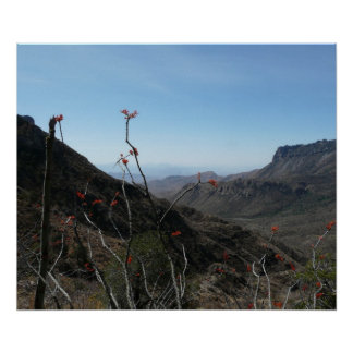 Big Bend National Park-Mountains with Flowers Poster