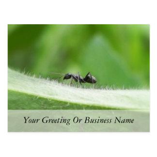 Big Black Ant Postcard