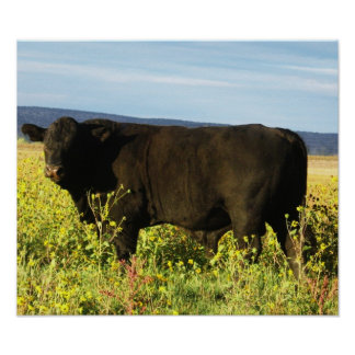 Big Black Bull in Sunflowers - Toro - Taurus Poster