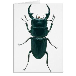 Big Black Dung Beetle Card