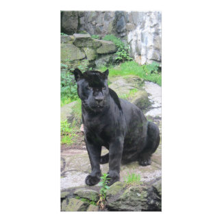Big Black Jaguar Cat on Sitting on Rock Photo Card