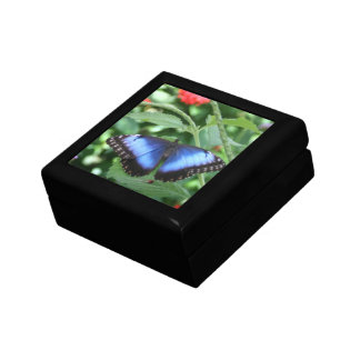 Big Blue Butterfly 2 Small Square Gift Box