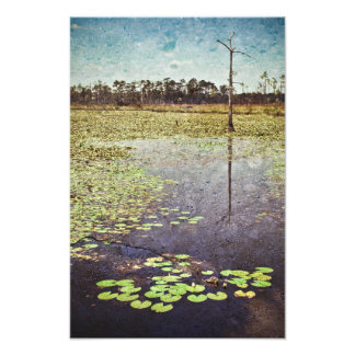 BIg Branch Swamps in Louisiana Photo Print