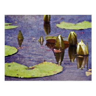 Big Branch Swamps Postcard