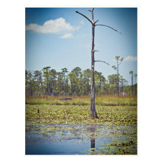 BIg Branch Swamps Postcard