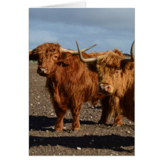 Big Brown Highland Cows, Card