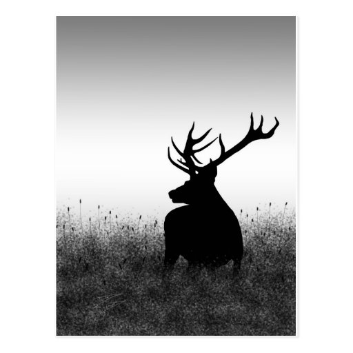 Big Buck Post Card