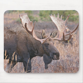 Big Bull Moose Mouse Mat